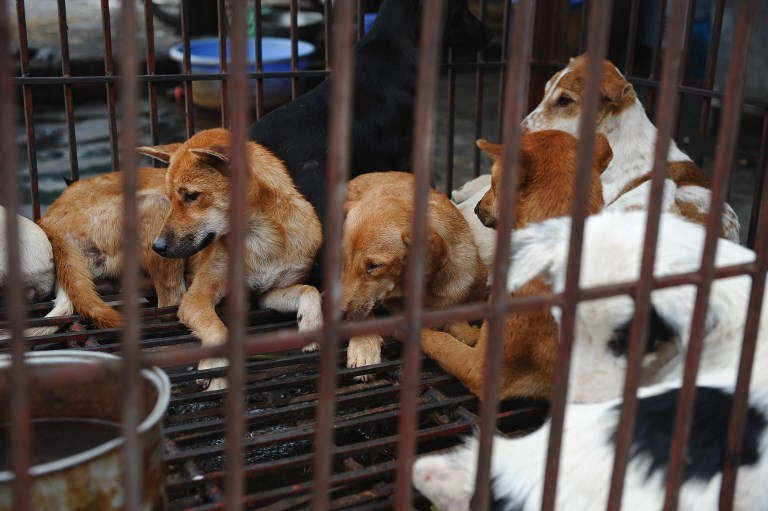 Hanoi urges residents to stop eating dog meat