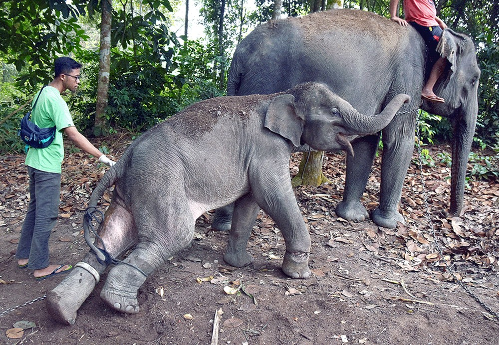Flooding forces elephants to enter residential area