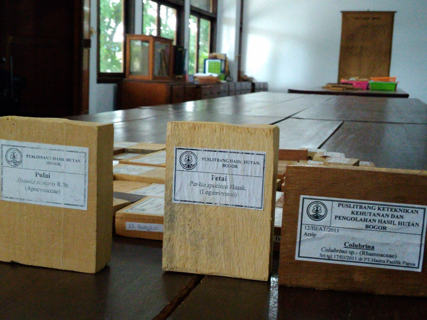 Ministry to name Bogor's xylarium world's largest wood collection