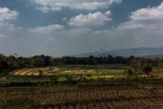 The view of paddy fields after harvest in Beji village, Ngawen district, Gunungkidul regency, Yogyakarta. JP/Anggertimur Lanang Tinarbuko