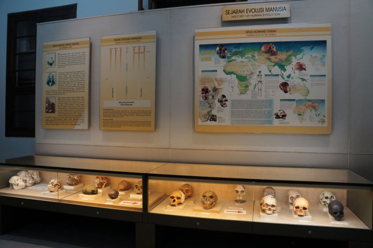 A glimpse of the Geological Museum's display of bone artifacts.