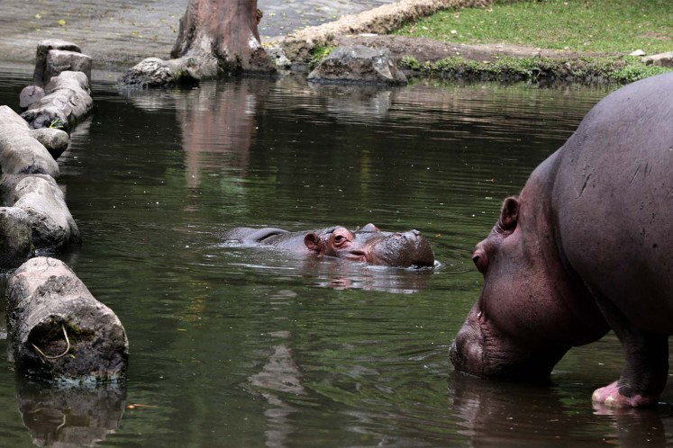 Visitors can see hippos relaxing by the water while they go on the Safari Journey.