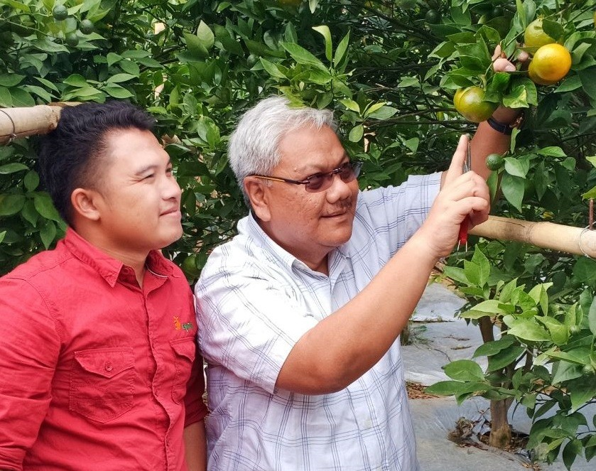 The young farmer working to bring back the popularity of Garut oranges