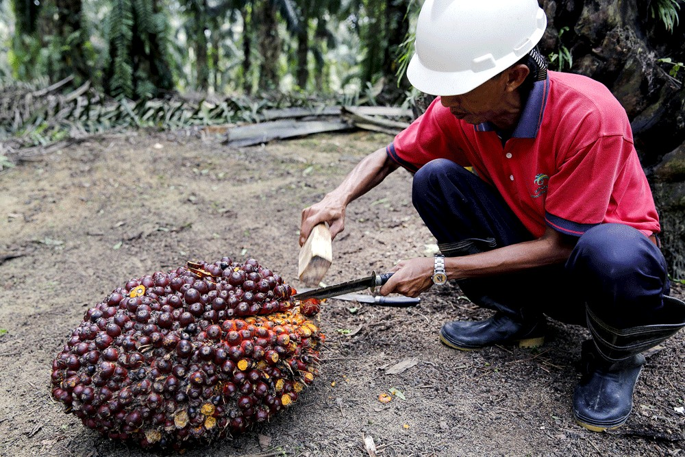 Jokowi, Mahathir send letter of objection to EU over palm oil plan