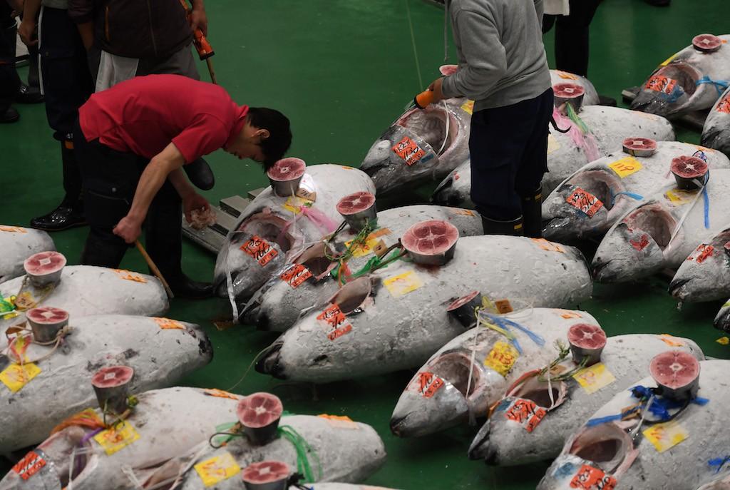 First tuna auction at Japan's 'new Tsukiji' market