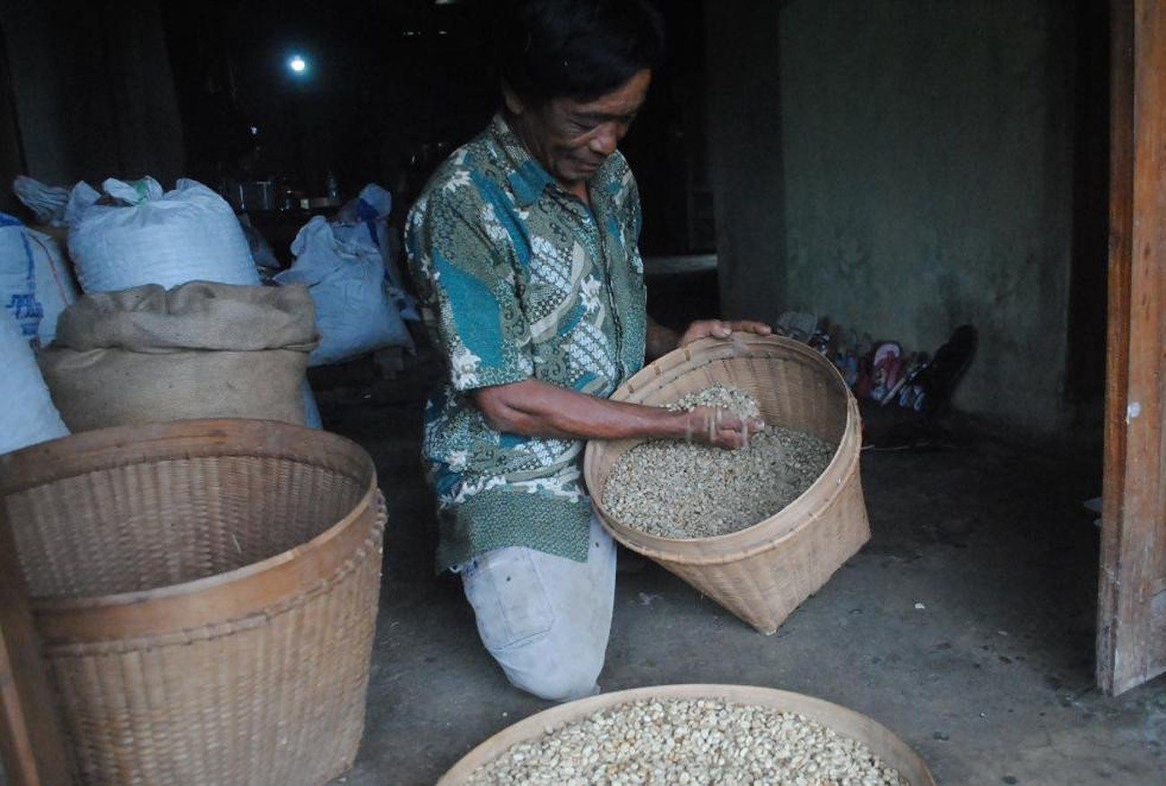 Sular, petani kopi yang membantu menghidupkan kembali penanaman kopi di Kabupaten Bulukerto, Wonogiri, menyortir biji kopi kering di ladangnya di desa Conto, Bulukerto |