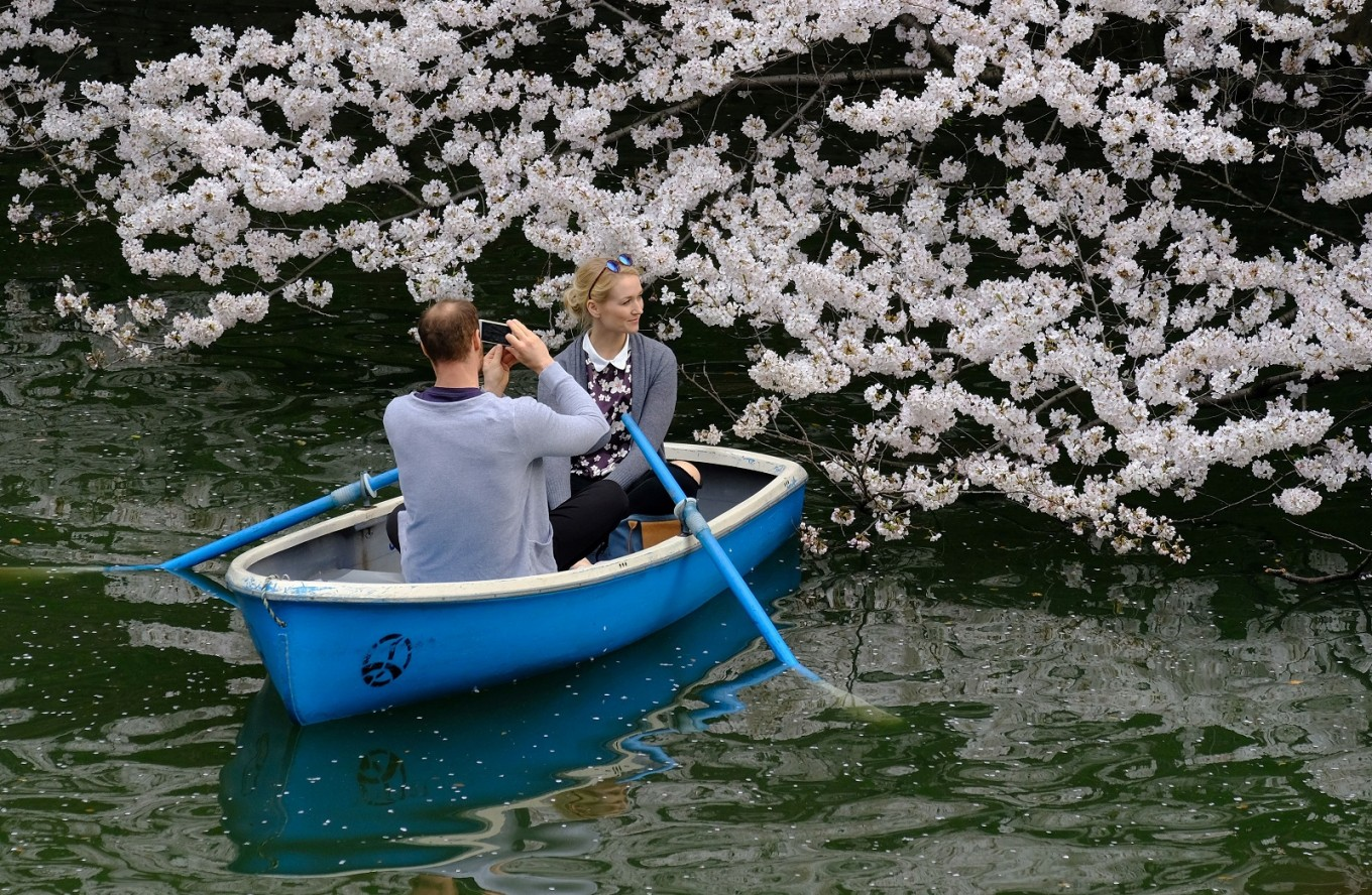 Japan's famed cherry blossoms make unexpected appearance