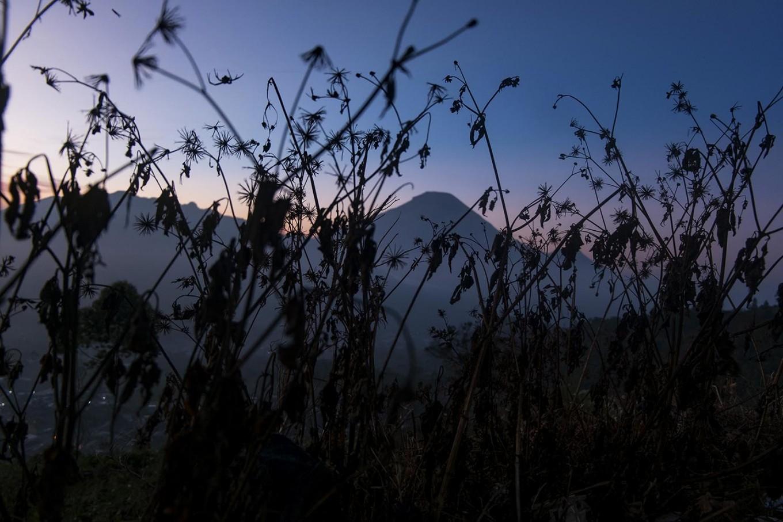 Plants die because of the embun upas (lethal dew). JP/Tarko Sudiarno