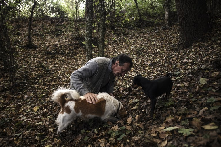 'For the dog, it's a game': Sniffing out truffles in Italy