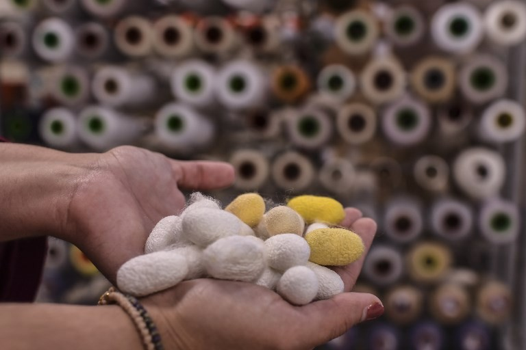 A woman shows silk cocoons at a silk fabric factory in the Greek northern town of Soufli on October 10, 2018.