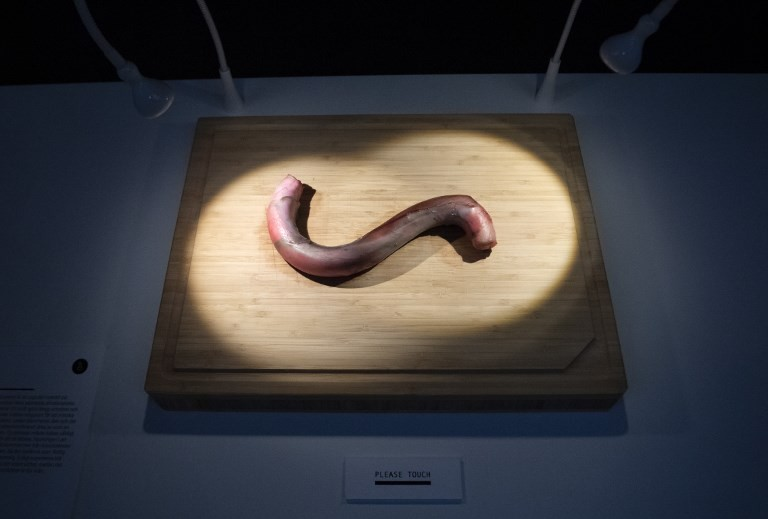 A bull penis is displayed at the Disgusting Food Museum in Malmo, Sweden on November 4, 2018.