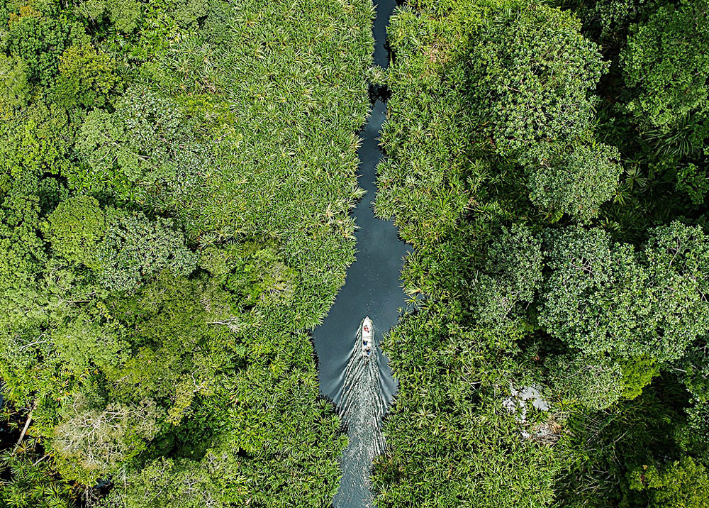 Restoration program protects critical forest ecosystem in Riau