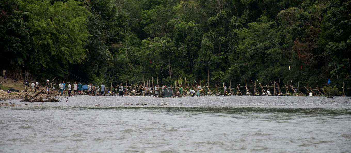 Let's catch: Aur Kuning villagers temporarily set fish barriers in the Subayang River at the start of the Mancokau Festival. JP/Tarko Sudiarno