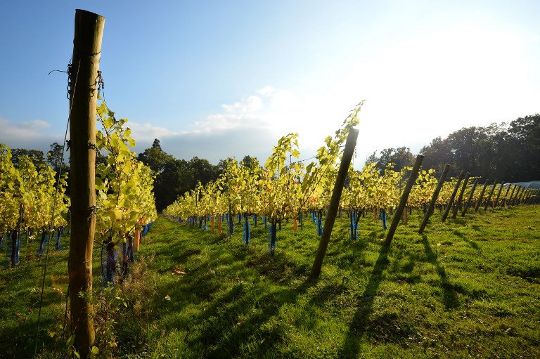 Climate change offers sparkling prospects to English winemakers