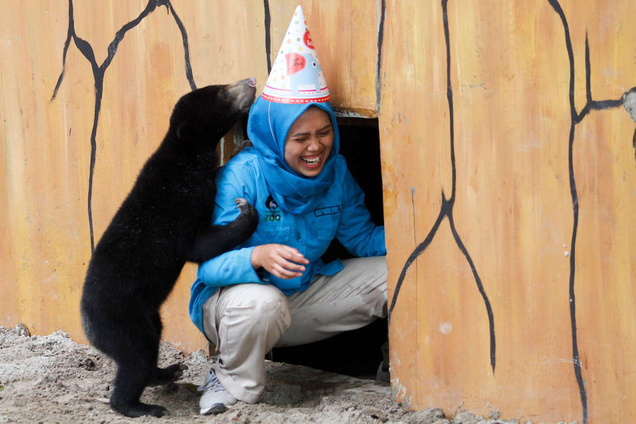 Bandung Zoo celebrates sun bear's birthday to respond to public concern