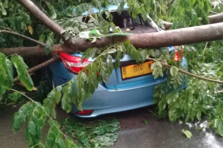 More trees fall in South Jakarta, damage taxi
