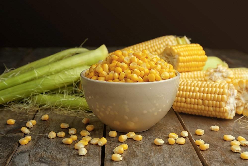 A-maize-ing genetic sleuthing rewrites history of corn