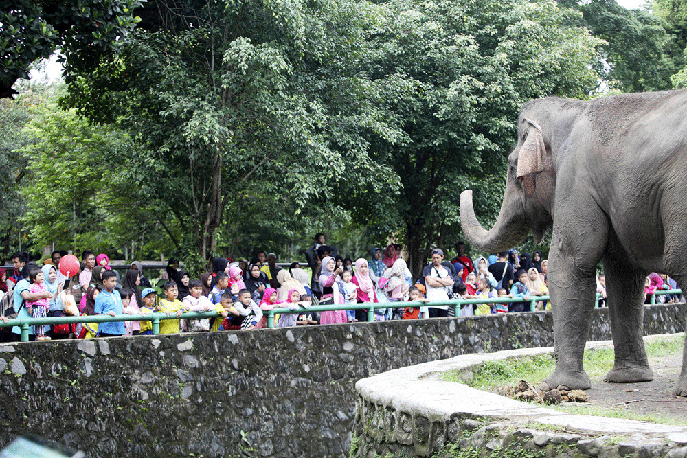Jakarta allocates Rp 1 billion for zoo renovation design competition