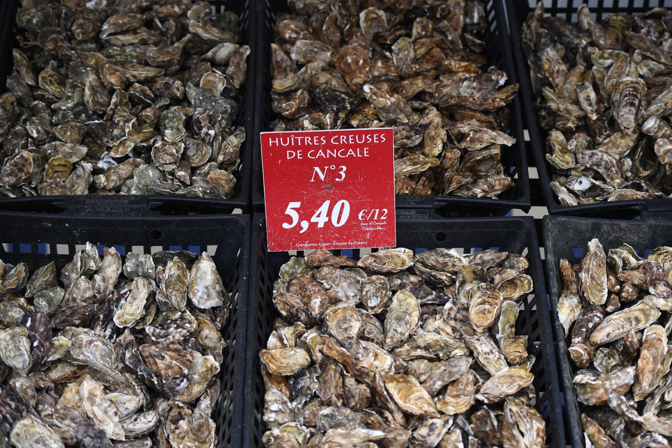 Climate change takes toll on French oyster farmers