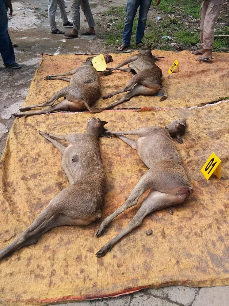 Wildlife crime: Carcasses of deer hunted illegally on Komodo Island were confiscated during a security raid in Bima, West Nusa Tenggara, on Saturday.