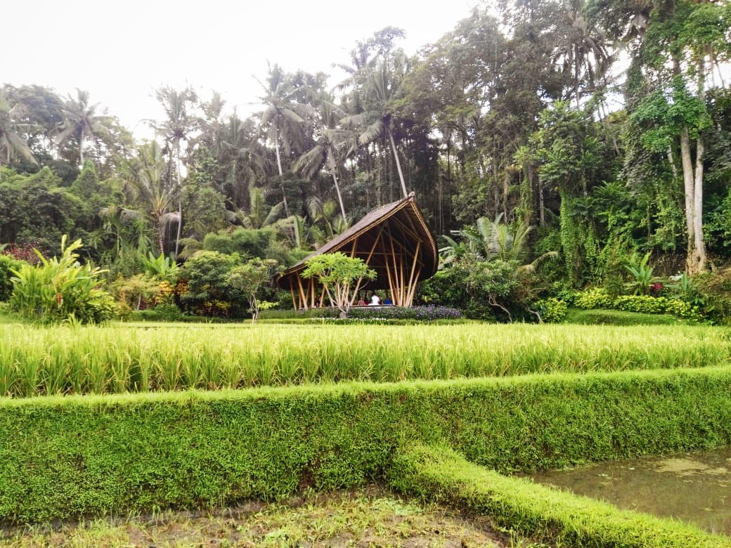 A rice field at Four Seasons Bali in Sayan.