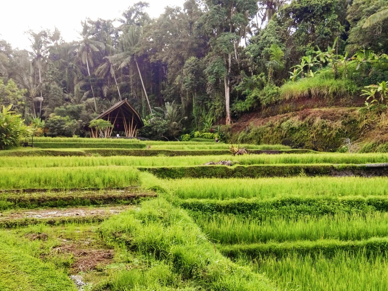 A jungle path is located to the right of the rice terrace at Four Seasons Bali in Sayan.