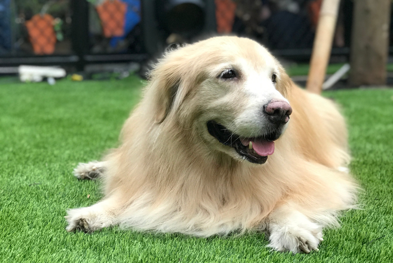 New dog park Paws caters to Kelapa Gading shoppers