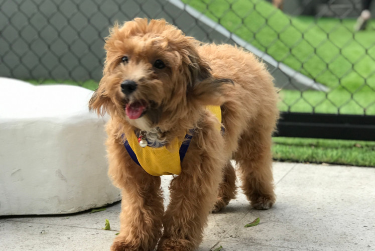 Paws provides separate facilities for small and large dogs, as well as a shared swimming pool.