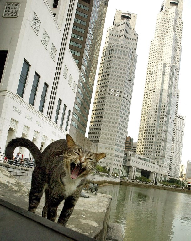 Fur-midable: Singapore foils cat-in-trousers smuggling bid