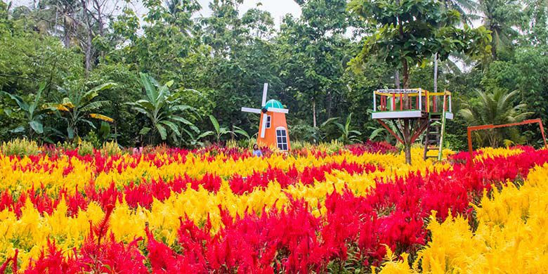 Klaten flower garden offers colorful experience