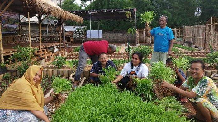 Urban farming groups in South Jakarta harvest 149 kilograms of vegetables