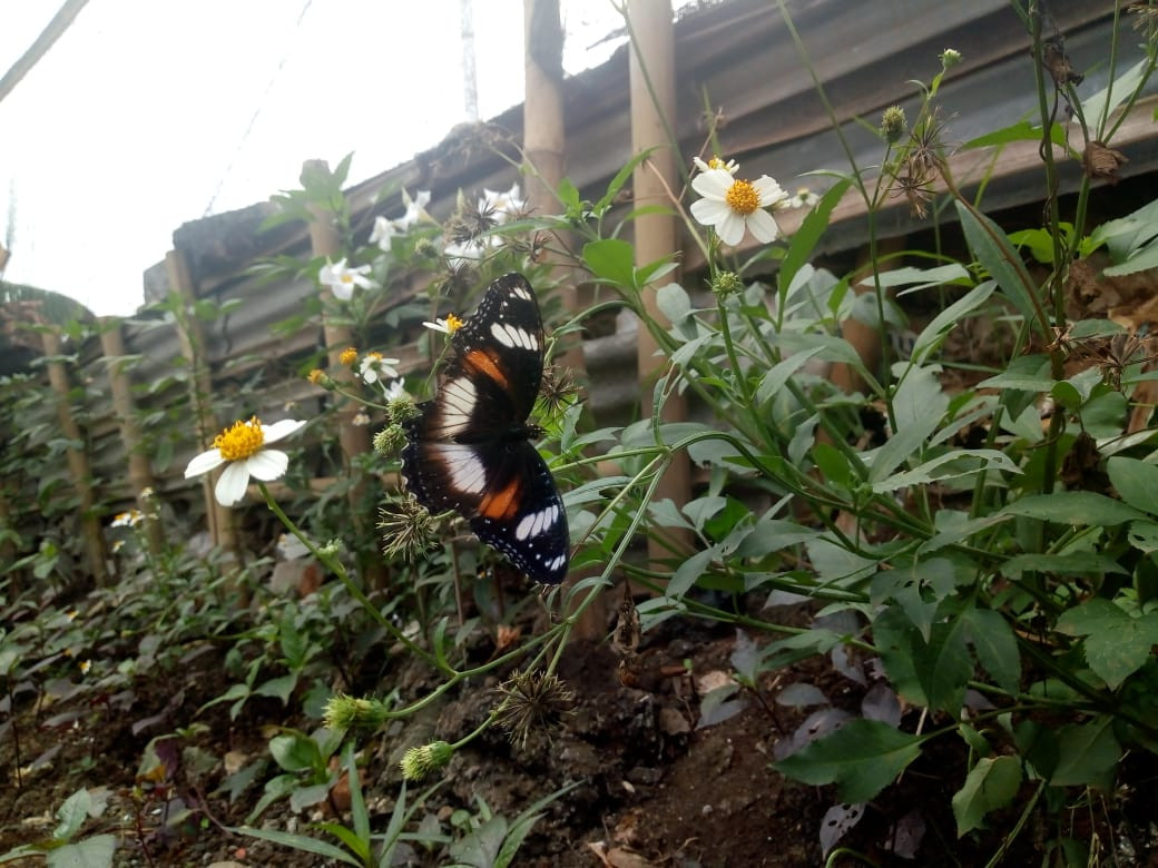 East Jakarta dump turned into butterfly garden
