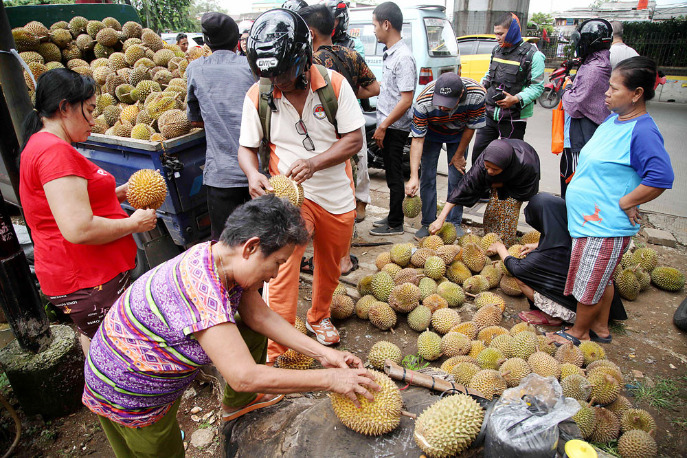 Jokowi tells oil palm tree growers to turn to durian