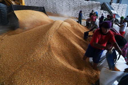 Agriculture Ministry criticized for inaccurate info on corn