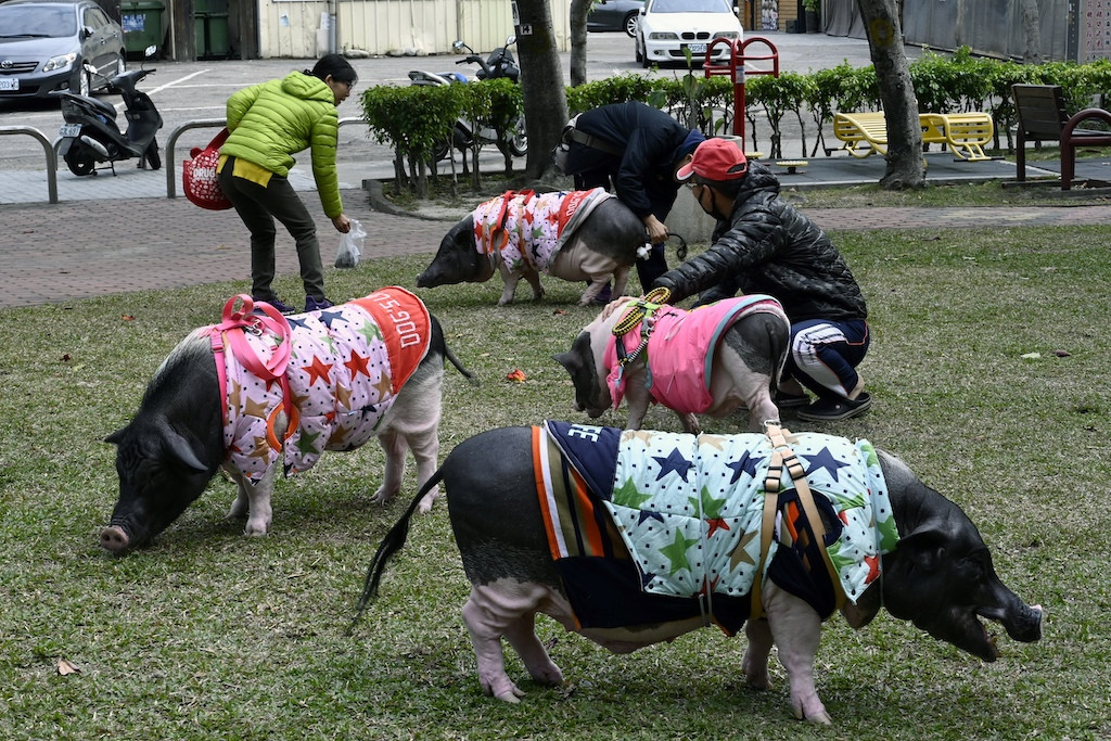 Stop pigging out and save the planet, Chinese told ahead of Lunar New Year