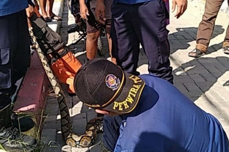 Python found trapped in Thousand Islands fishing net