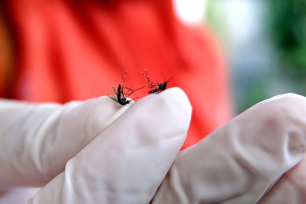 17 chikungunya virus infections in Depok