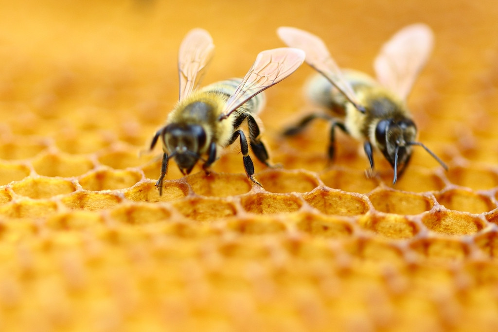 Honeybees smart enough to do basic math, study finds