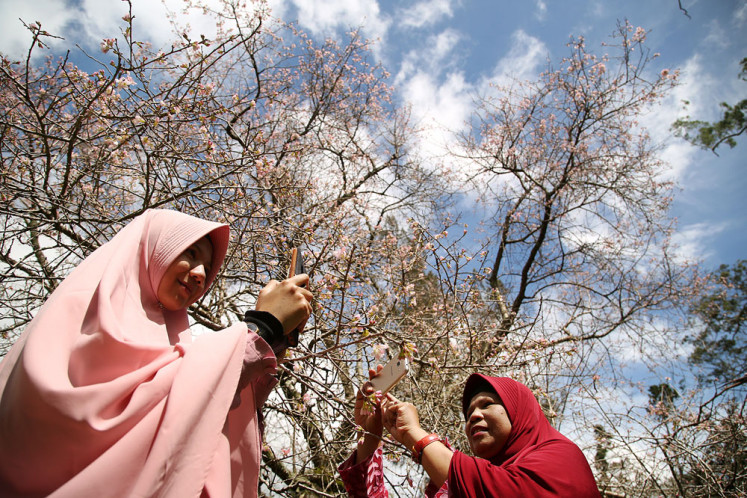 Thousands of visitors flock to Cibodas Botanical Garden on reopening day