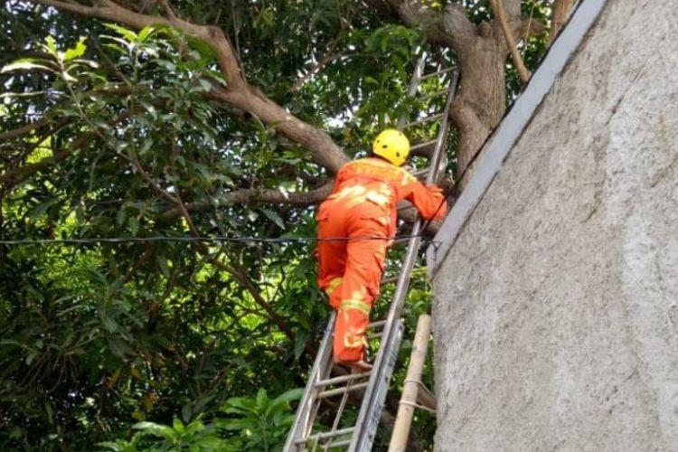 6-meter python found in tree in West Jakarta