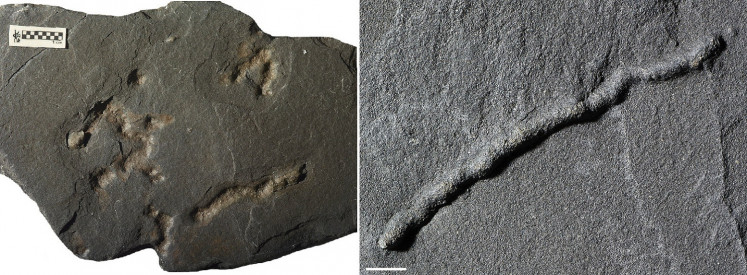 Tubular structures found in black shale from a quarry in Gabon dating from 2.1 billion years ago - providing evidence of the earliest-known mobile organisms on Earth - are shown in Poitiers, France in this undated handout photo obtained February 11, 2019.