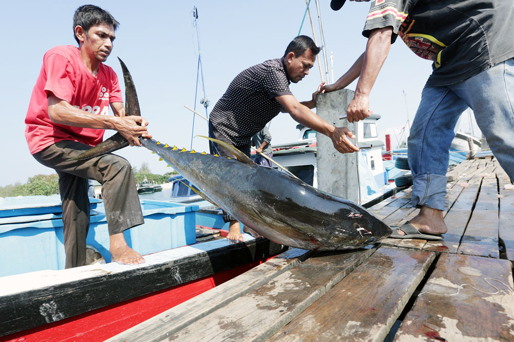 Is Indonesia really top global tuna exporter?