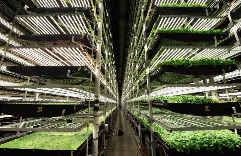 Tech connection boosts New York vertical farmers