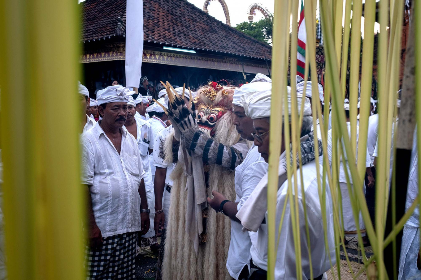 A Balinese man dances while wearing the Rangda during Ngerebong. Balinese Hindus evoke spirits to put them in a trance-like state during which many will push daggers into their chest and neck. JP/Agung Parameswara