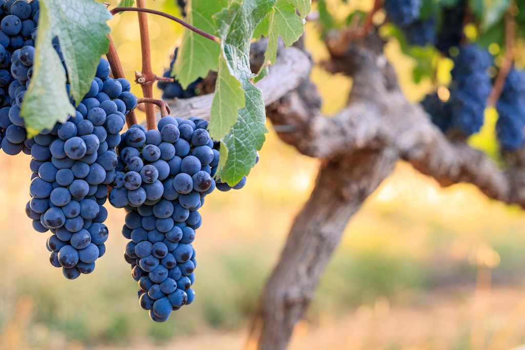 Wine made easy: It's time to pay attention to the other cabernet