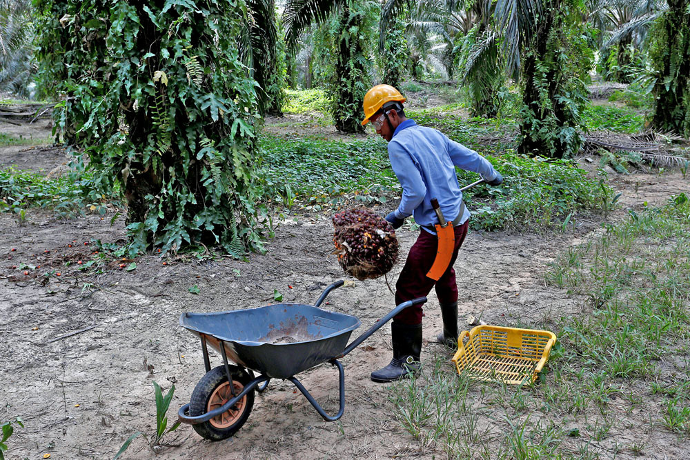 Palm oil prices may hit nine-year high in turbulent 2021