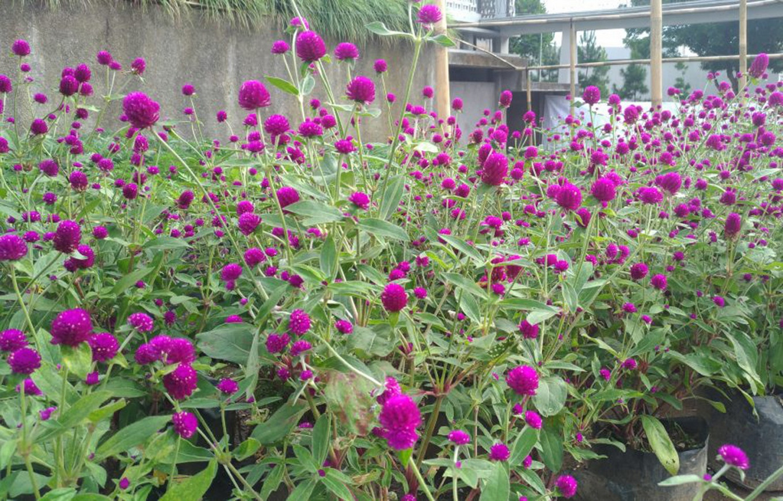 Colorful plants at Rumah Atsiri.