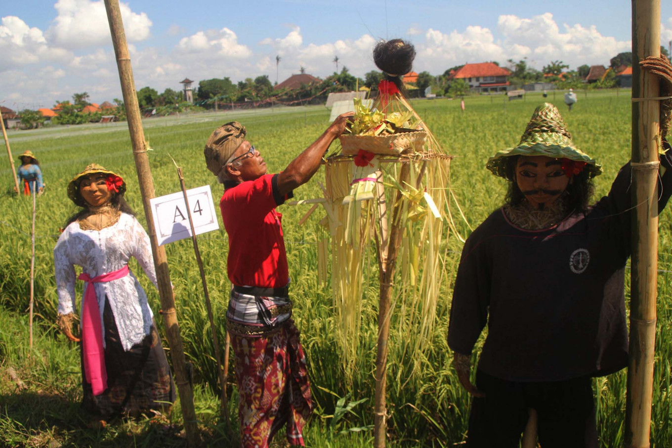 A farmer puts the offerings in between two scarecrows after the festival. JP/Zul Trio Anggono