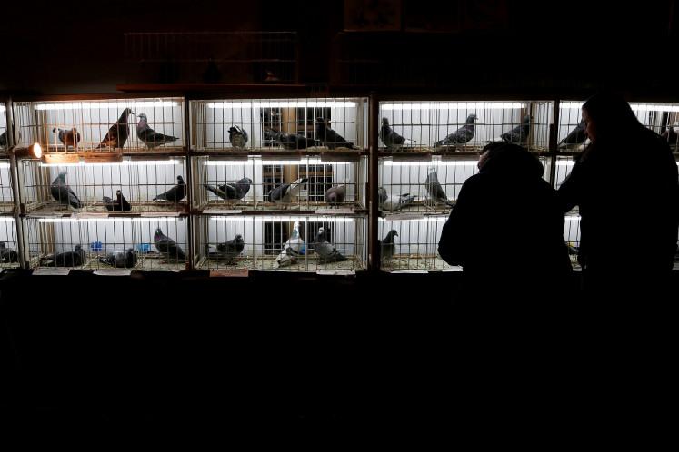 Million-dollar birdie: Belgian pigeon smashes price record