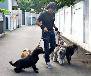 Dog walkers: Lifesavers for busy Jakartans